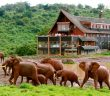 Elefant safari