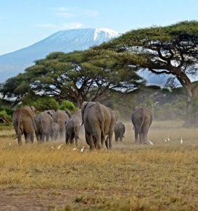 Hvad er safari?