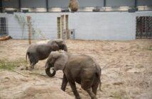 Pensionerede cirkuselefanter